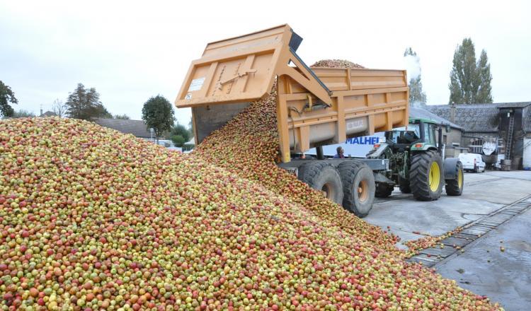 Les cidreries pourront distiller des hectolitres, mais aucune mesure ne concerne à ce jour le déstockage de pommes non transformées.