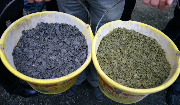 En bovins, le colza est plus intéressant que le tournesol, car ce dernier présente des valeurs plus basses, avec beaucoup de cellulose.