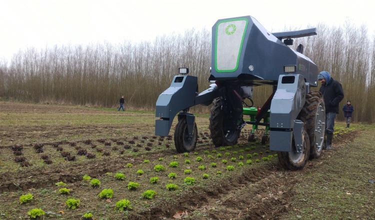 L'automatisation du désherbage est une priorité pour les professionnels des productions végétales.