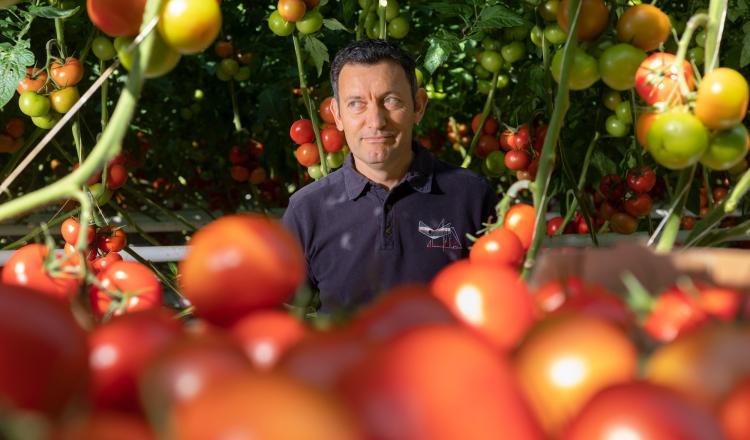 Producteur de tomates sous serres au Loroux-Bottereau, Yannick Lechat préside Ydeal, la nouvelle OP qui a vu le jour dans le maraîchage nantais. (photo Jean-François Mollière)