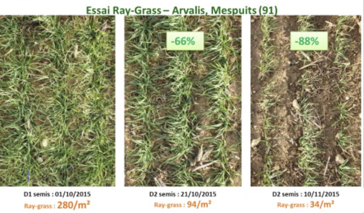 Le positionnement du semis en période recommandée (21/10) permet de réduire la pression des ray-grass de 66/% en comparaison