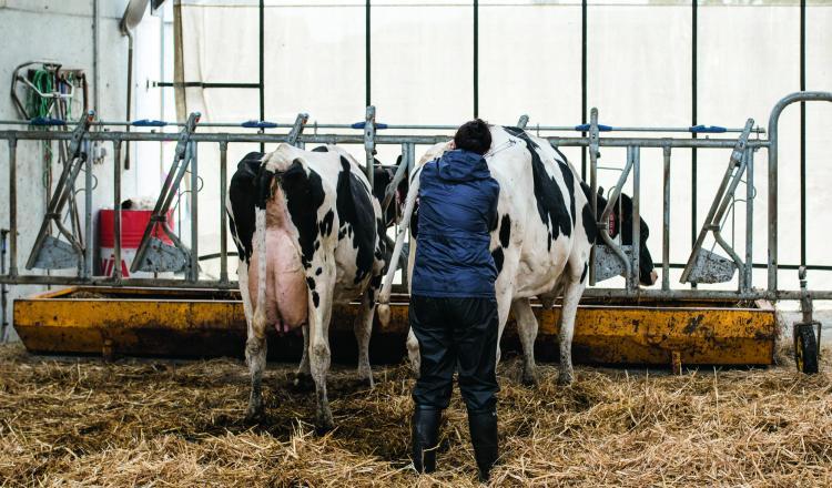 La formule 2021 de l'Isu met davantage l'accent sur la reproduction pour répondre aux besoins des éleveurs.