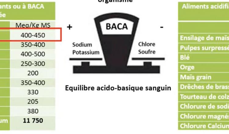 Chaque aliment a une valeur Baca, qui correspond à la différence entre les ions positifs (sodium et potassium) et les ions négatifs (chlore et soufre). Pendant la prépa vêlage, il faut limiter les apports d'aliments à Baca élevée.