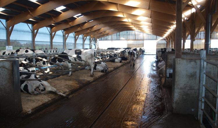 Le cout global d'un bâtiment vaches laitières varie de 412 ¬ à 637 ¬/VL/an suivant les types de bâtiments.