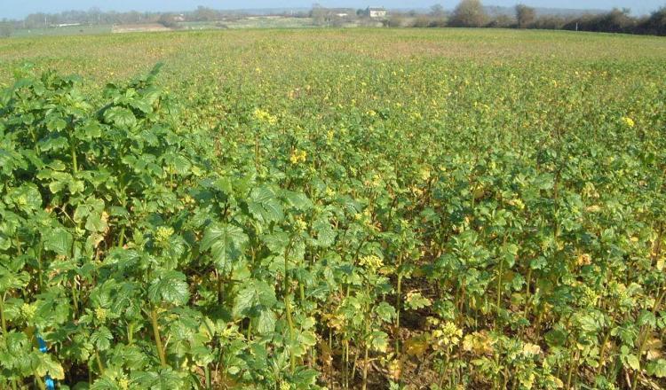 Les agriculteurs se sont déjà approprié certaines préconisations, comme les couverts végétaux. (photo Archives)