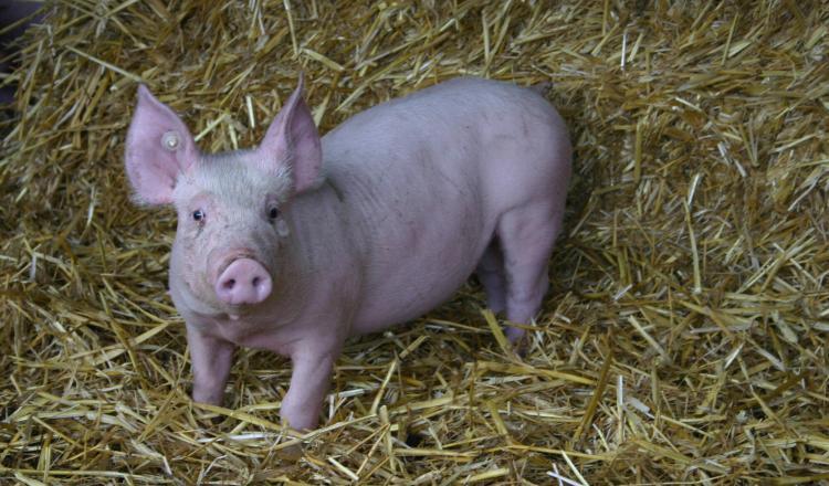 Le bien-être animal et celui de l'éleveur sont liés. C'est l'approche One Welfare.