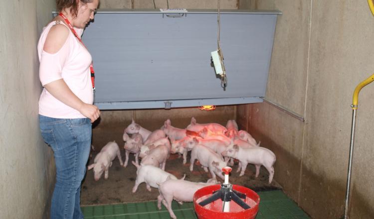 La production porcine soufre d'un déficit d'image. Le confort de travail pour les intervenants (éleveurs, salariés et...
