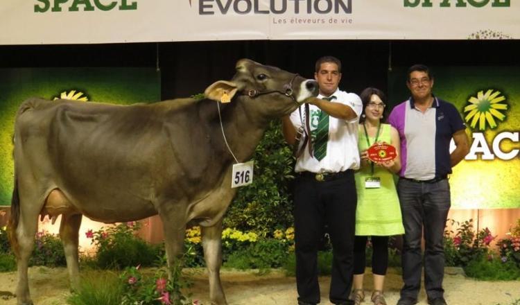 Gelia, à l'EARL de la Vinçais (44), est une fille de Payout, un taureau allemand disponible en semence sexée.