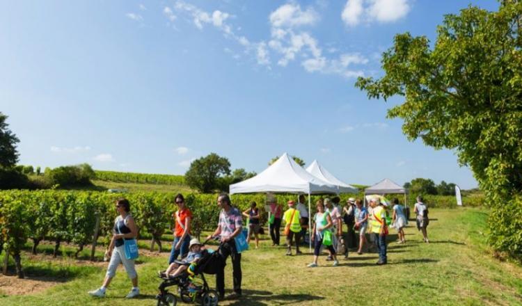 Depuis la première édition, 80000 personnes ont parcouru en famille, en solo ou entre amis, 97millions de km dans les vignes du Val de Loire et dégusté 1500 cuvées. (Photo public. Crédit photo: S.Frémont)