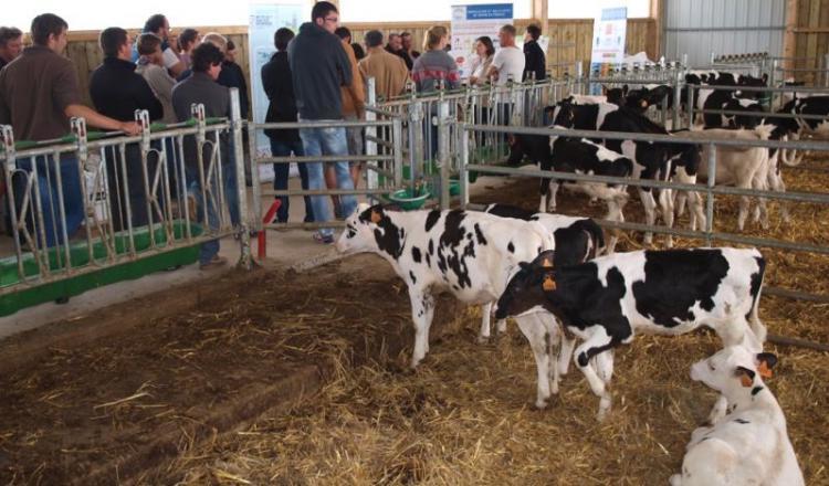 L'élevage cherche à optimiser les conduites de l'herbe et du pâturage afin de réduire les consommations de concentrés et d'optimiser ses critères techniques. Réduire la fertilisation azotée de 60 à 40 U/ha est un autre objectif poursuivi dans le cadre du plan carbone.