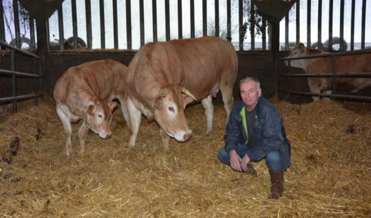 Gérard Barbier sera l'un des six éleveurs retenus pour concourir dans la section vache suitée, avec Jambette, et son veau Navette.
