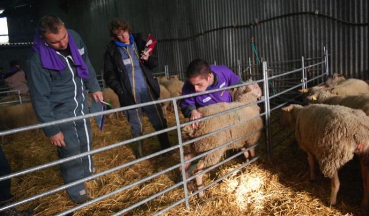 Aux Ovinpiades des jeunes bergers, le 22novembre dernier. La maîtrise technique est la principale clé de la réussite en élevage ovin. La filière veut désormais accompagner les jeunes installés les premiers mois pour éviter échecs et découragements.