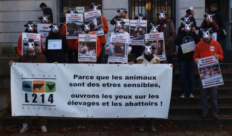 L214 est une association de protection animale qui a manifesté mardi dans une dizaine de métropoles régionales, comme ici à Nantes, pour dénoncer les dérives de l'élevage industriel.