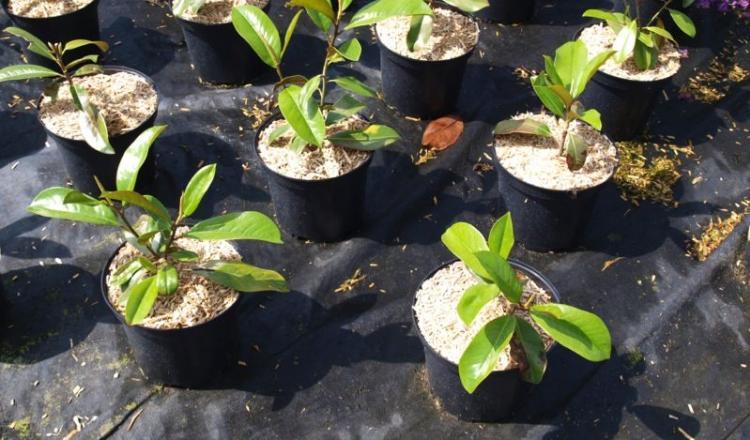 """Le thème du salon """"Inventons le végétal facile!"""", avec son slogan """"Fasila jardiner"""", a été défini pour donner une image plus accessible au végétal."""