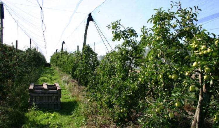 L'an dernier, l'enquête avait permis d'anticiper une pénurie de main-d'œuvre en arboriculture. 40% des besoins exprimés concernaient ce secteur.