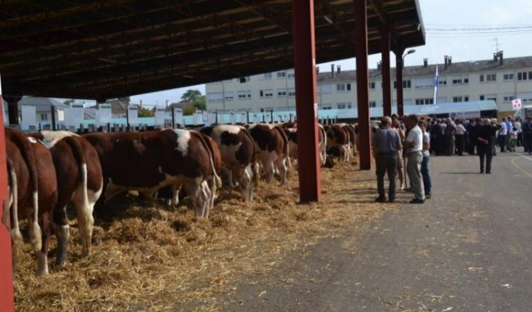 Le festival de la viande d'Evron reste un phare inamovible marquant la rentrée. Les piliers de ce week-end sont bien là: concours d'animaux de viande, concours de reproducteurs, animations musicales, foire commerciale, etc. Mais leur teneur varie. Co