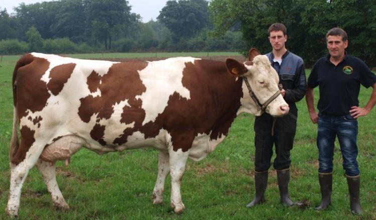 C'est le père de Philippe Gasnier qui, dès 1982, avait acheté les premières femelles de race Montbéliarde. Depuis, les trophées et les coupes se sont succédé pour la famille Gasnier depuis 1996 à Béré. L'une des dernières super vaches de l