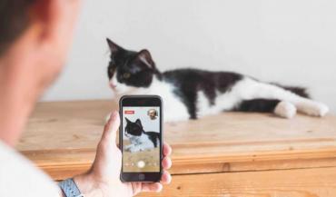 Linkyvet propose des téléconsultations médicales pour animaux. (photo Linkyvet)