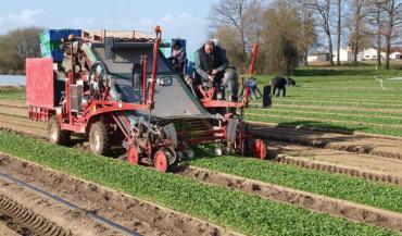 A l'image de la mâche, dont la région fournit 85/% de la production nationale, les autres cultures de plein champ (radis, poireaux, etc.) sont les secteurs du maraîchage nantais qui demandent le plus de main-d'Suvre.