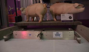 Le racleur double sens (ici en exposition au dernier Space) est adapté pour les bâtiments porcs, mais aussi veaux et canards.