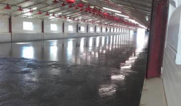 L'enquête avicole des Chambres d'agriculture montre qu'il n'y a pas de différence significative par rapport aux résultats technico-économiques entre un sol béton et un sol en terre battue. (photo chambre d'agriculture de Bretagne)