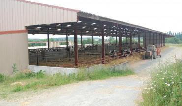 """Bâtiment génisses très ouvert au Gaec Alliance élevage à Jallais (Maine-et-Loire). """"Il faut oublier l'idée du bâtiment fermé, qui protège et garder l'idée plutôt d'un bâtiment parasol"""", préconise l'Institut de l'élevage."""