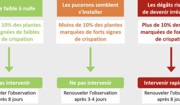 Règle de décision pour une éventuelle intervention insecticide contre pucerons sur tournesol.