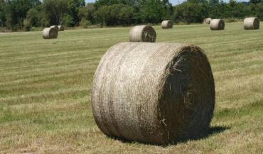 Le foin est de qualité, les semis de maïs se sont déroulés dans de bonnes conditions... Mais qu'en sera-t-il au coeur de l'été si une nouvelle sécheresse s'abat sur le pays ?