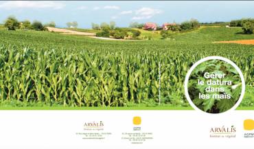 L'Association des producteurs de maïs AGPM et Arvalis ont édité une plaquette pour aider les agriculteurs à lutter contre le datura au champ.
