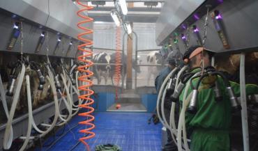 L'escalier pour accéder à l'aire d'attente (au fond) a été remplacé par deux marches sur pente douce. La brumisation permet de rafraîchir les trayeurs et les vaches, l'été.