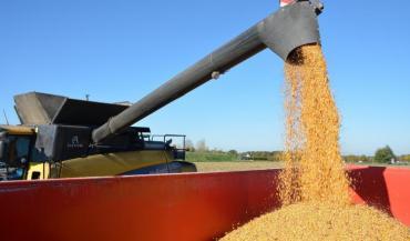 La situation de marché est excédentaire, particulièrement en maïs.