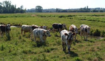 En zones humides, élevage et biodiversité sont liés. Reconnus pour leurs services écosystémiques, ces milieux naturels conviennent bien aux activités d'élevage extensif.
