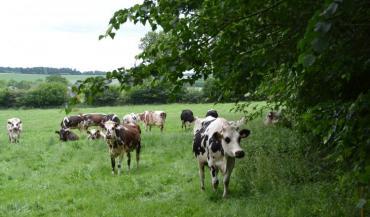 Le modèle laitier français serait plus vertueux que celui de ses voisins et concurrents. Un atout d'avenir pour se positionner sur les marchés?
