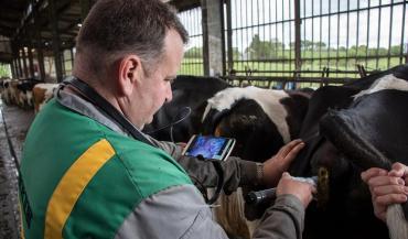 Certains éleveurs obtiennent de très bons taux de réussite IA sans fouille rectale, juste en déposant la semence au plus loin dans le col après avoir vérifié que la vache est en chaleur. (photos IMV Technologies)