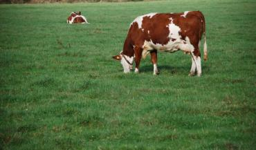 """Le Lait de pâturage est une segmentation en vogue dans les produits laitiers. Mais les acteurs doivent dépasser la question du montant des primes liées aux surcoûts alimentaires, insiste Benoît Rubin de l'Idele. """"Il faut poser la question de la valeur du changement"""" d'approche système."""