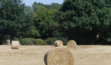 Les tonnages de paille récoltés et disponibles sont aussi en net recul.