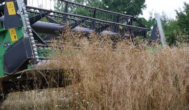 Les colzas, dont les surfaces ne cessent de diminuer en France, enregistrent un peu partout une mauvaise année de plus.