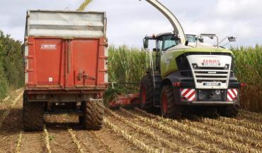 Avant de prendre la décision d'ensiler, il convient de faire un diagnostic au champ, en veillant à bien rentrer à l'intérieur des parcelles où les maïs peuvent être très différents des bordures.