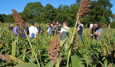 La société Semental présente sa plateforme de variétés de sorghos sucriers BMR, sur une parcelle de la ferme expérimentale des Trinottières.
