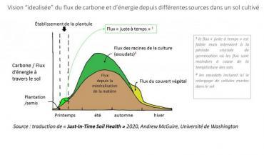 """(1) Le flux """"juste-à-temps"""" est faible mais intervient à la période cruciale de germination où les flux sont moindres à cause de la température des sols.(2) Les exsudats incluent ici le relargage de cellules mortes dans le sol. Source : traduction de """"Just-in-Time Soil Health"""" 2020, Andrew McGuire, Université de Washington."""