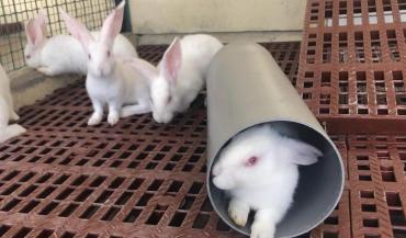La démarche vise à dynamiser le quotidien des lapins.
