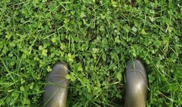 Photo d'une prairie semée en septembre/2019, et datant d'avril 2020. Cette prairie avait alors été utilisée exclusivement en pâturage, trois fois.