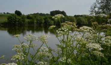 Réserve d'eau au Plessis-Macé (Maine-et-Loire). Des berges sinueuses et en pente douce permettent de faciliter la diversité...