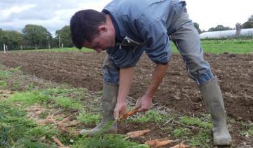 Les carottes seront triées pour conserver le standard de la variété.