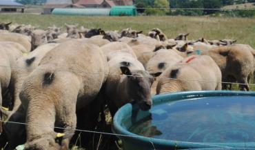 En matière de qualité, l'eau doit répondre à des recommandations. (photo CIIRPO)