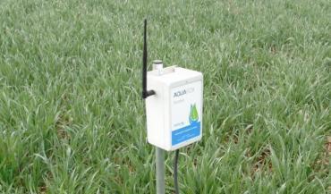 La sonde capacitive installée dans une parcelle de blé, communique les taux d'humidité sur six horizons.