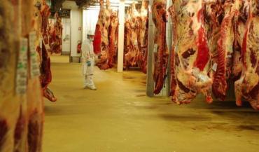 Dans les chambres froides, les carcasses entières ou les demi-carcasses de gros bovins.