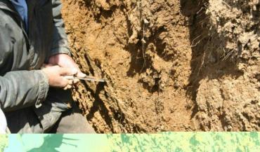 Les racines descendent en profondeur et attaquent la roche mère (photo archive).