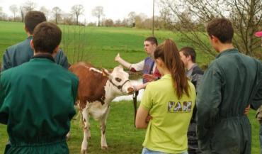 Du 19 au 22juillet, les éleveurs de Normande font leur show, à Mayenne.