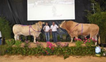 Corse, à l'EARL Barbier (Marcillé-la-Ville) est championne adulte du concours. Et Furtif, au Gaec Linay Pottier (Le Bourgneuf-la-Forêt, 53) est champion adulte du départemental Blonde d'Aquitaine.